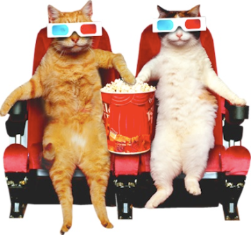 2 Cats at the movies