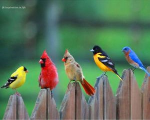 birds-fencepost