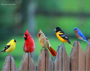 birds-fencepost
