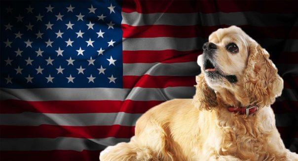 american flag-dog.jpg
